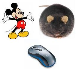 Mouse, Michey Mouse